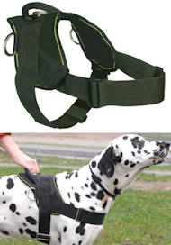 Best Dog Training Harness for BULLMASTIFF