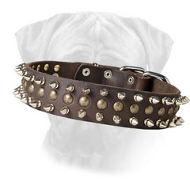 Decorated Leather Bullmastiff Collar Perfect Look