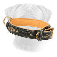 New Braided Leather Bullmastiff Collar Nappa Padded