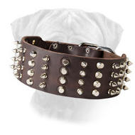 Extra Wide Leather Studded Bullmastiff Collar Cool Novelty