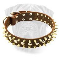 Leather Dog Collar with Nickel Studs and Brass Spikes for Bullmastiff