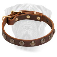 Fancy Studded Leather Dog Collar for Bullmastiff Puppy
