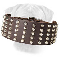 Studded Leather Bullmastiff Collar
