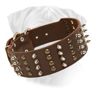 Bullmastiff Spiked & Studded Leather Dog Collar