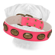 Must-have Vintage Pink Leather Bullmastiff Collar for Walking in Style