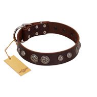"""Choco Brownie"" FDT Artisan Brown Leather Bullmastiff Collar Adorned with Silver-Like Conchos"
