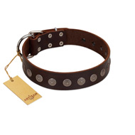 """Starry-Eyed"" Best Quality FDT Artisan Brown Designer Leather Bullmastiff Collar with Small Plates"