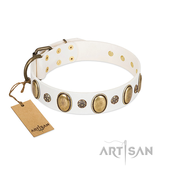 Everyday walking top rate leather dog collar with embellishments