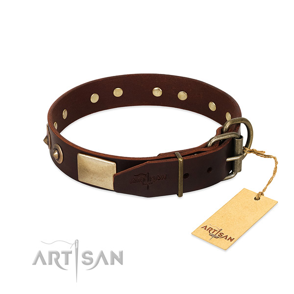 Rust-proof D-ring on everyday walking dog collar