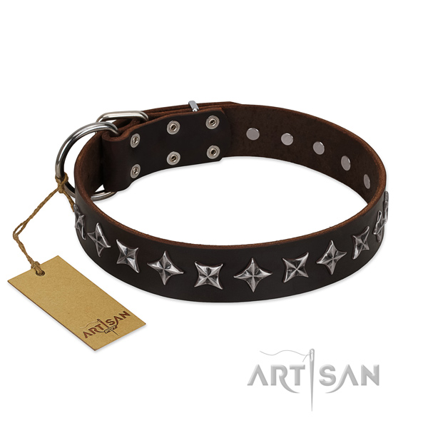 Stylish walking dog collar of best quality leather with embellishments