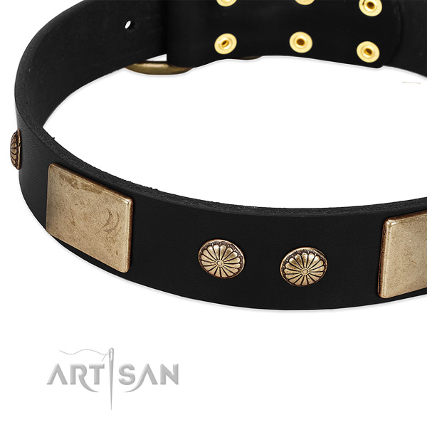 Genuine leather dog collar with studs for daily use