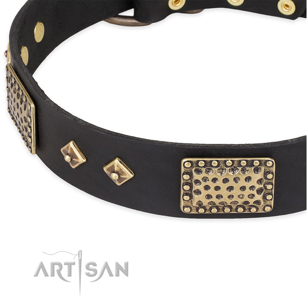 Corrosion proof studs on genuine leather dog collar for your doggie