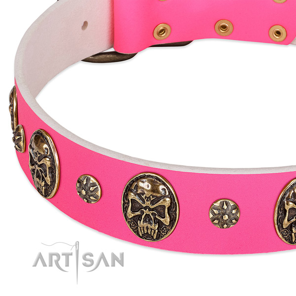 Extraordinary dog collar made for your handsome dog