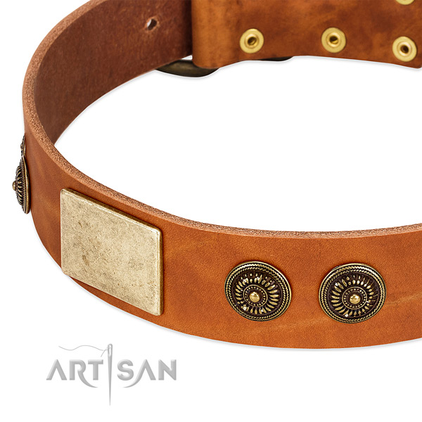 Stunning dog collar handmade for your handsome pet