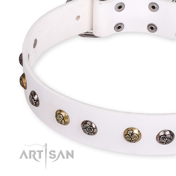Full grain genuine leather dog collar with stunning corrosion resistant embellishments
