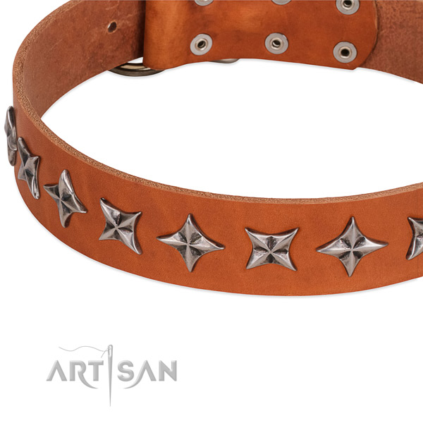 Everyday use studded dog collar of strong genuine leather