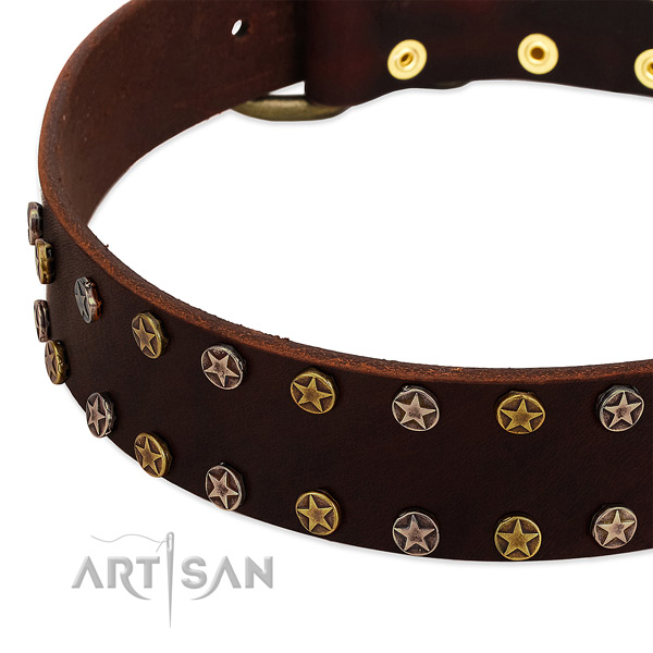 Everyday use full grain natural leather dog collar with stylish studs
