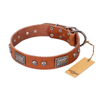 """Sparkling Skull"" FDT Artisan Tan Leather Bullmastiff Collar with Old Silver Look Plates and Skulls"