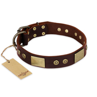 """Shining Armour"" FDT Artisan Brown Leather Bullmastiff Collar with Decorations"