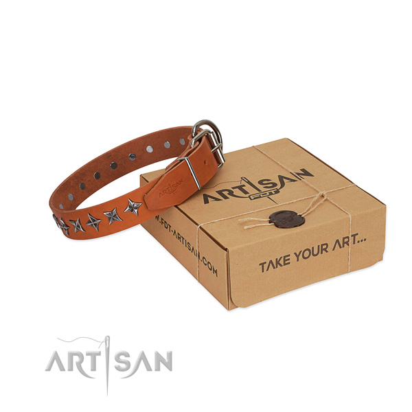 Everyday walking dog collar of reliable natural leather with studs