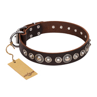 """Step and Sparkle"" FDT Artisan Glamorous Studded Brown Leather Bullmastiff Collar"