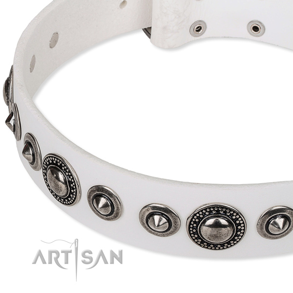 Basic training embellished dog collar of high quality full grain genuine leather