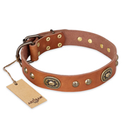 """Stunning Dress"" FDT Artisan Tan Leather Bullmastiff Collar with Old Bronze Look Plates and Studs"