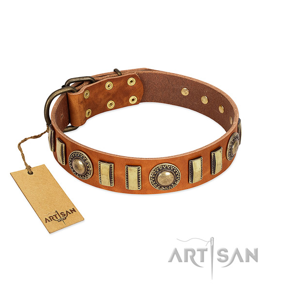 Unusual leather dog collar with strong buckle