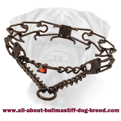 Prong collar of rust resistant black stainless steel for poorly behaved canines
