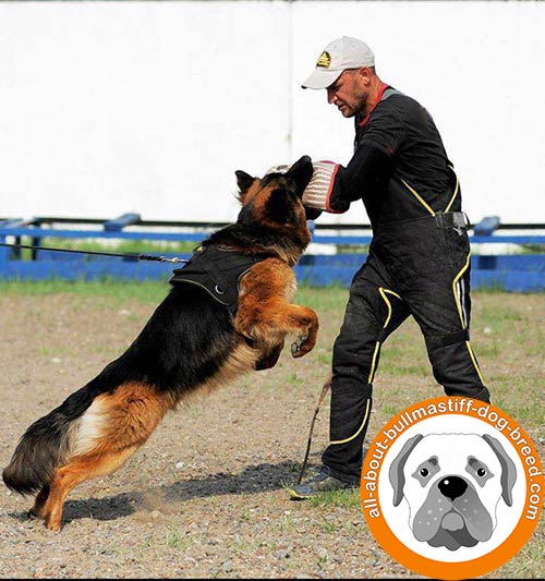 Durable nylon dog harness for efficient training