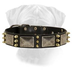 Fascinating Leather Dog Collar