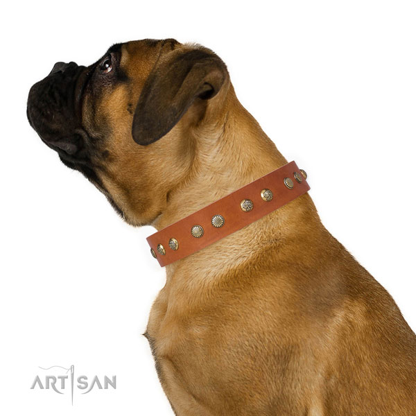 Stylish design embellishments on comfortable wearing leather dog collar