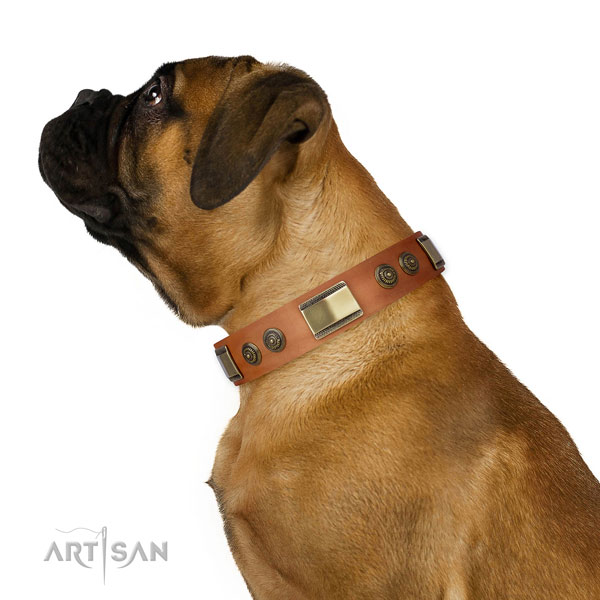 Unique adornments on walking dog collar