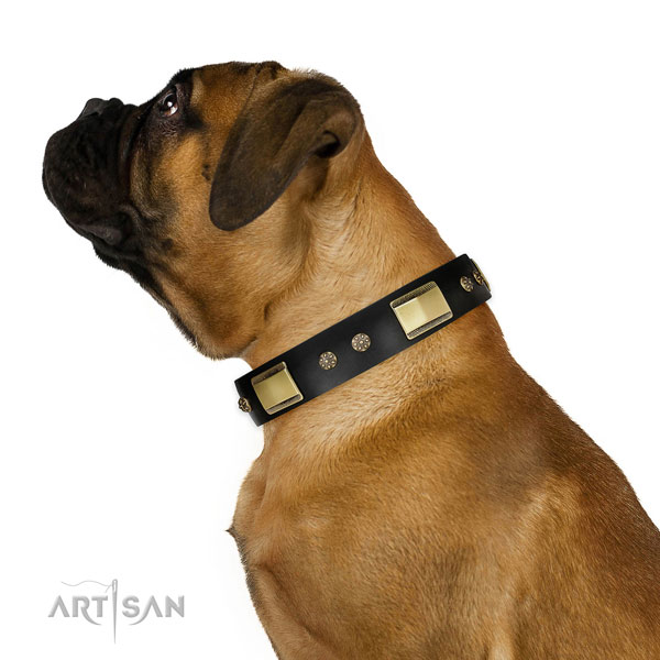 Everyday walking dog collar of natural leather with impressive studs
