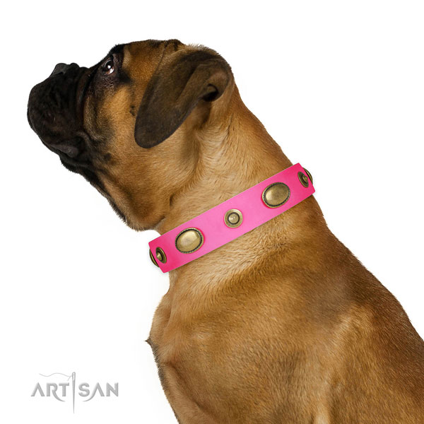 Comfy wearing dog collar of leather with incredible adornments