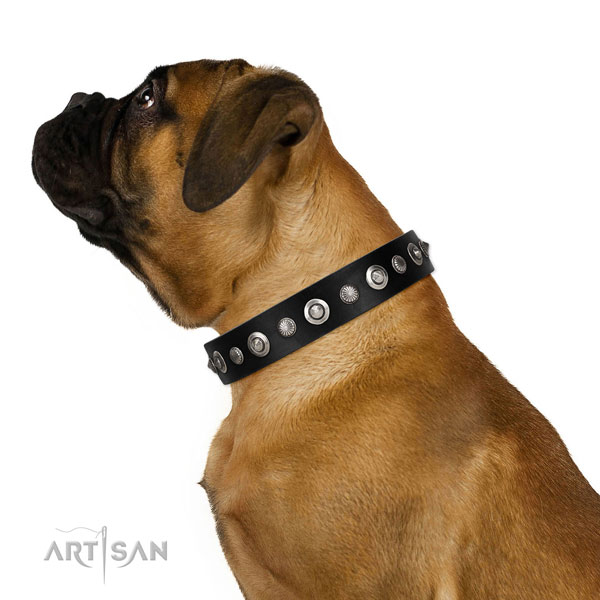 Fine quality full grain leather dog collar with remarkable adornments