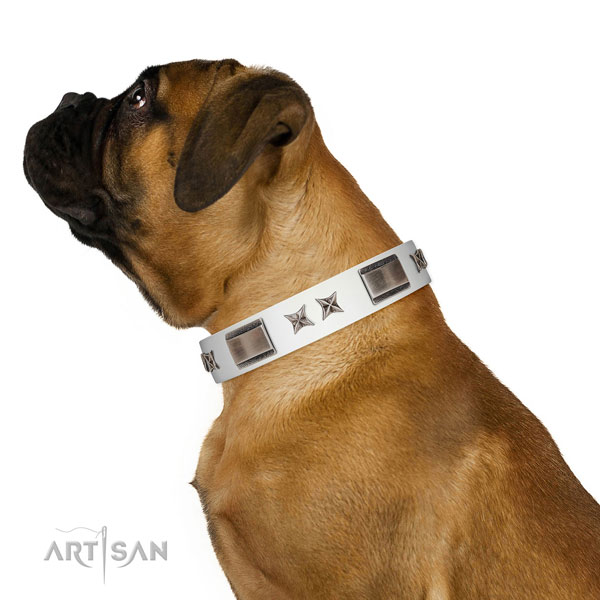 Remarkable collar of full grain natural leather for your impressive dog