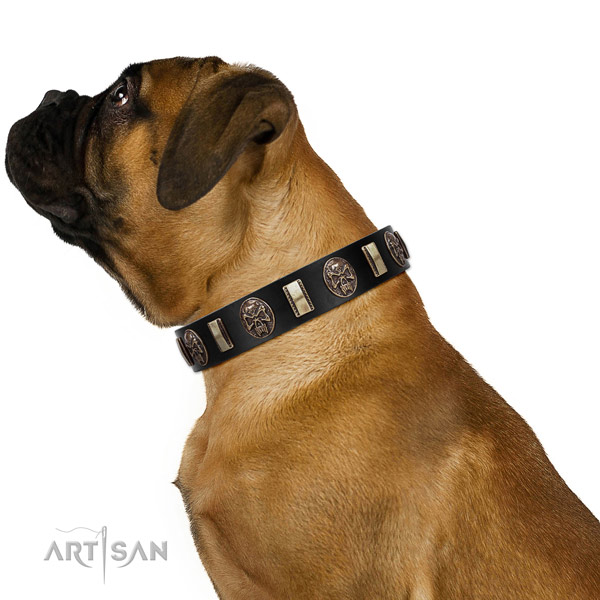 Leather collar with adornments for your beautiful four-legged friend