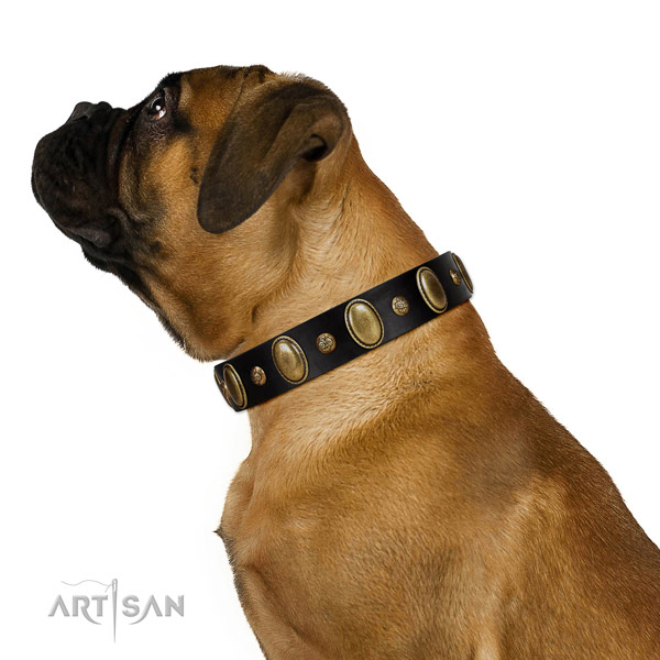 Full grain leather dog collar of gentle to touch material with impressive studs