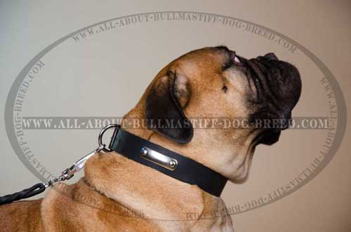 Classic Design Leather Dog Collar for Bullmastiff with Metal Name Tag