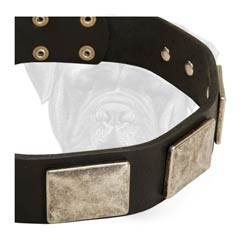 Bullmastiff leather Dog Collar With Special Decoration