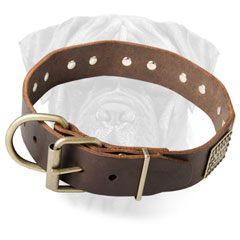 Leather Bullmastiff Collar for Walking