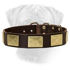 Wide Bullmastiff Leather Dog Colar With Big Riveted  Plates