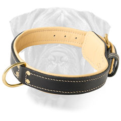 Bullmastiff Leather Collar with a Rustproof Buckle