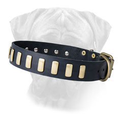 Bullmastiff leather dog collar sturdy