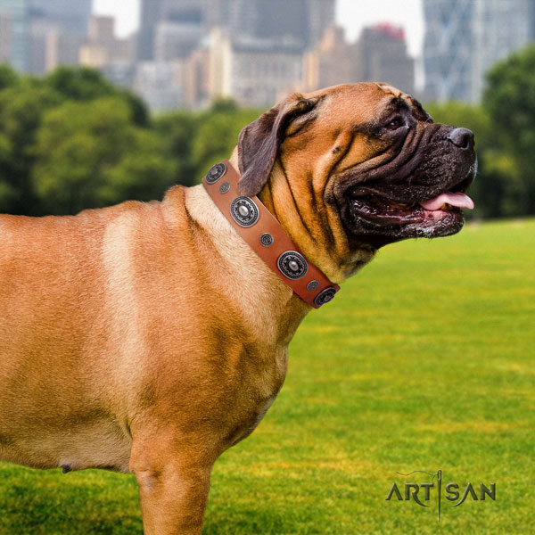 Bullmastiff comfy wearing dog collar of top notch quality genuine leather