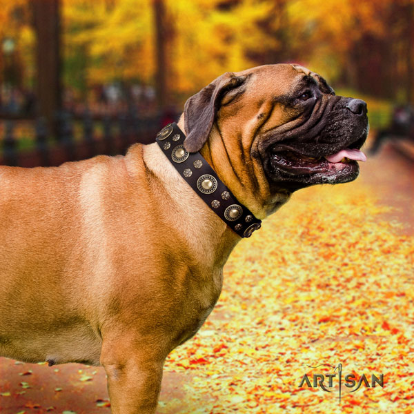 Bullmastiff comfortable wearing dog collar of trendy leather