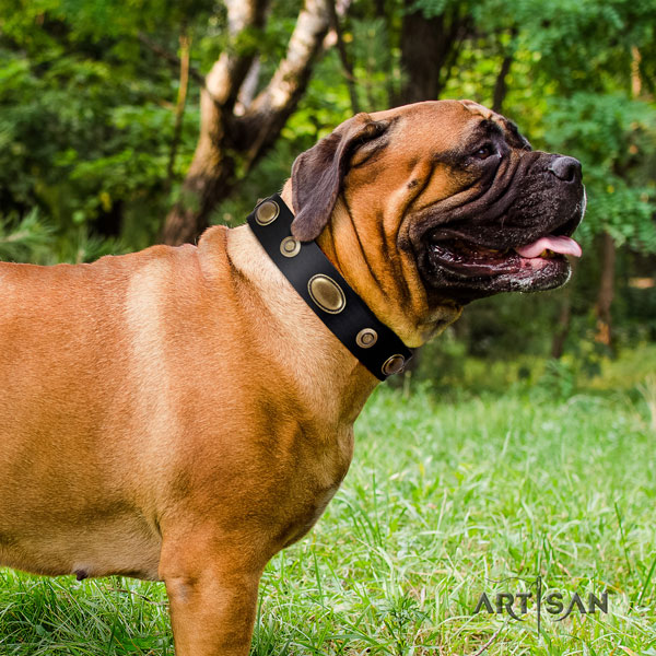 Bullmastiff fancy walking dog collar of remarkable quality natural leather