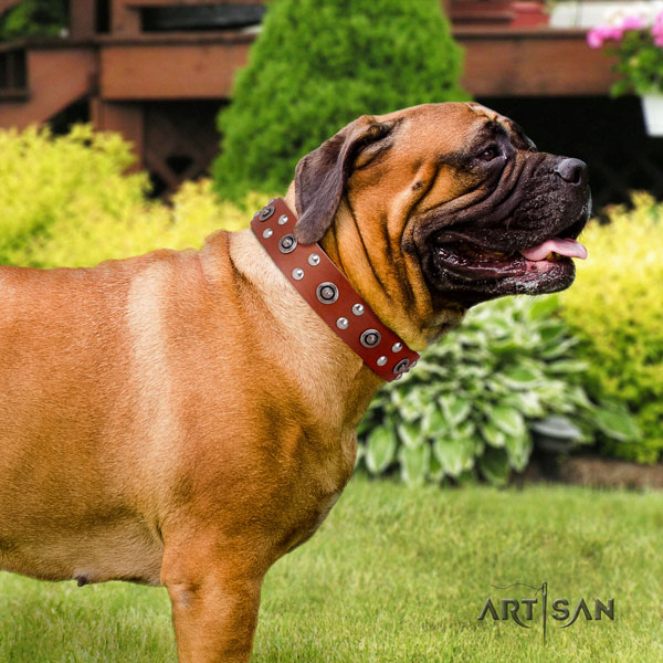 Bullmastiff everyday walking dog collar of comfortable natural leather