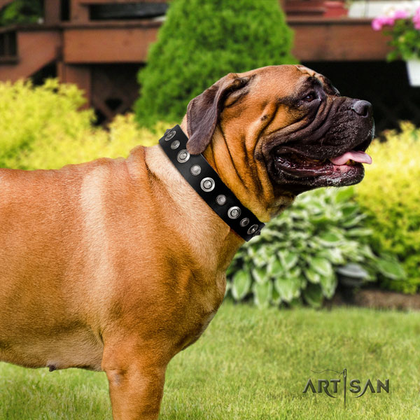 Bullmastiff comfy wearing dog collar of incredible quality leather